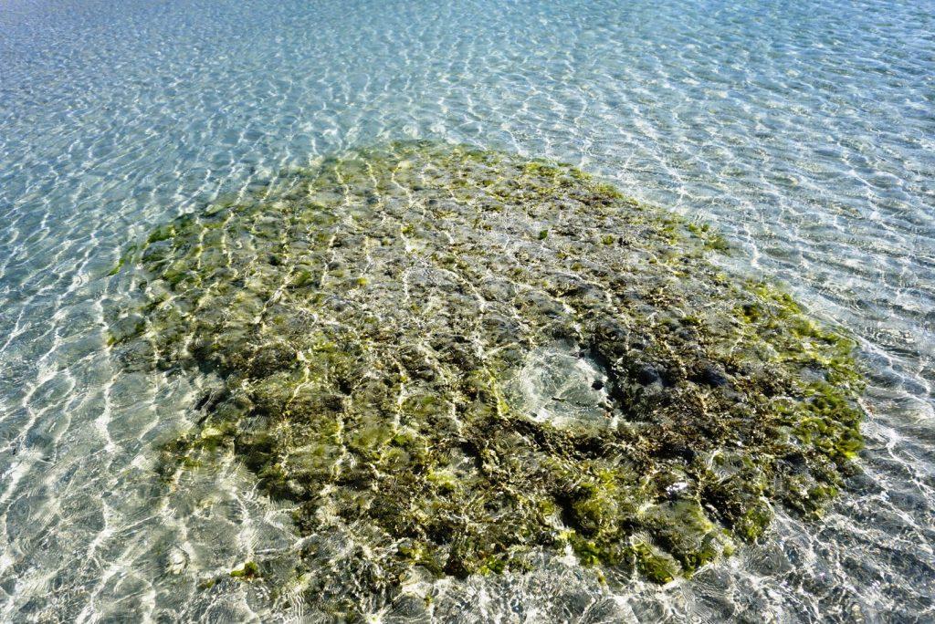 Shaheed Dweep(Neil Island) Stunning 37kms 12