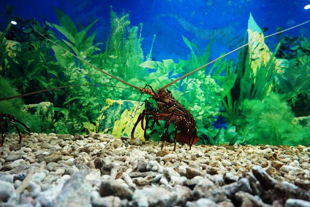 Surprising Samudrika Marine Museum is a must visit 10