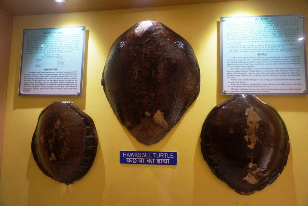 Surprising Samudrika Marine Museum is a must visit 17