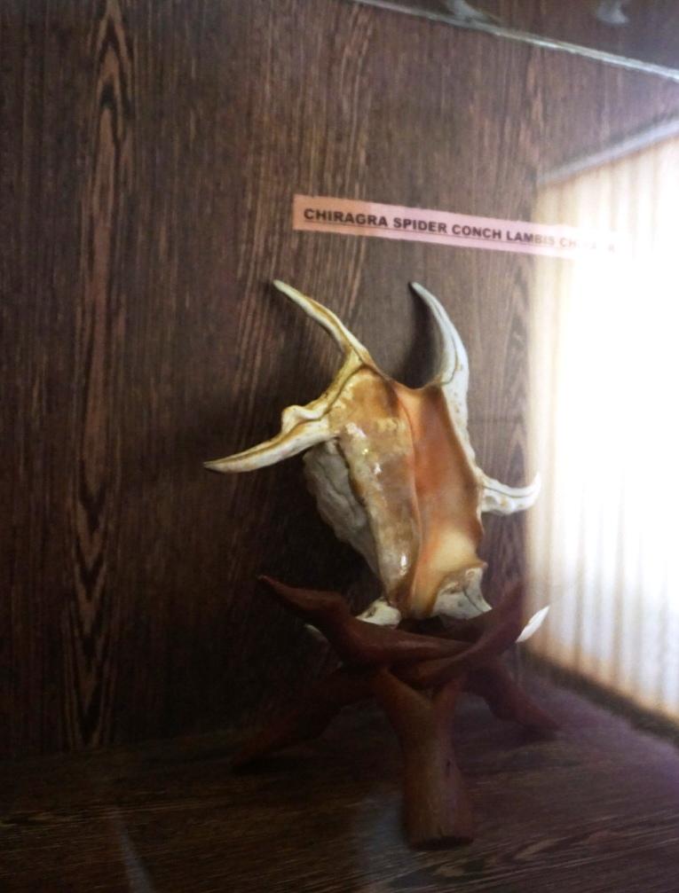 Surprising Samudrika Marine Museum is a must visit 22