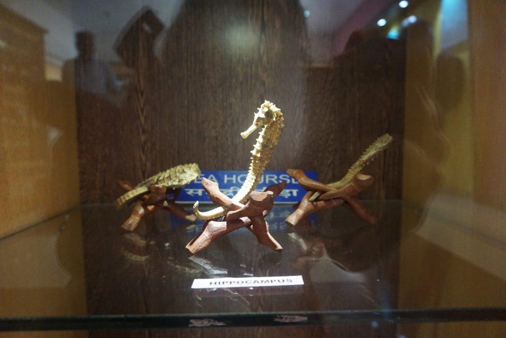 Surprising Samudrika Marine Museum is a must visit 8