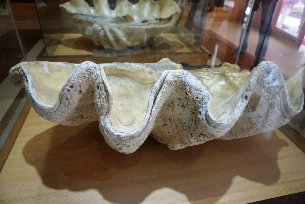 Surprising Samudrika Marine Museum is a must visit 20