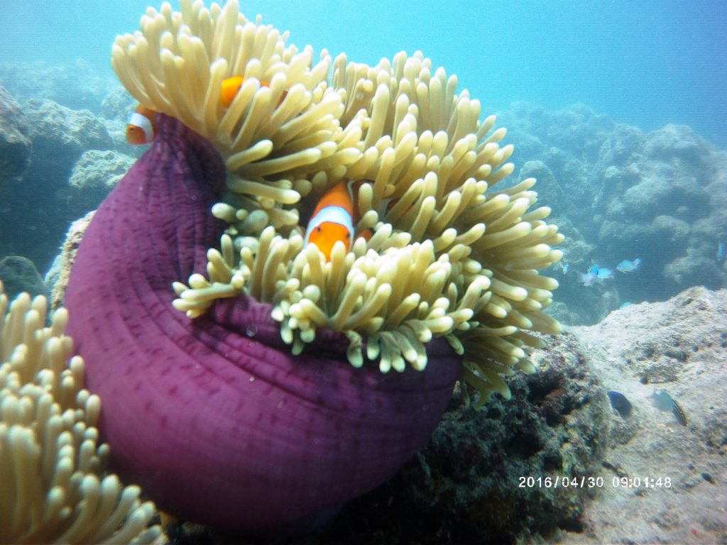 Dazzling Havelock Island - Swaraj Dweep 2 days Trip 9