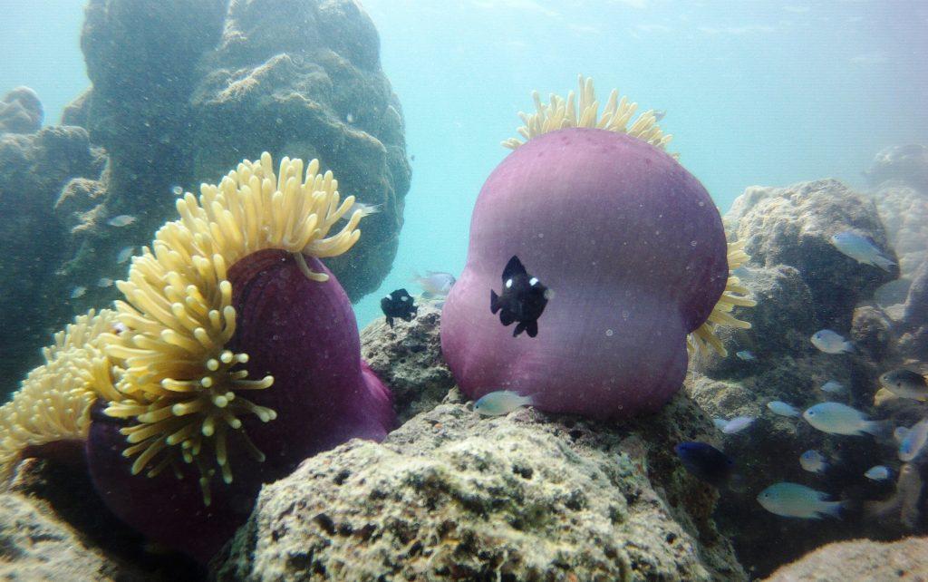 Dazzling Havelock Island - Swaraj Dweep 2 days Trip 10