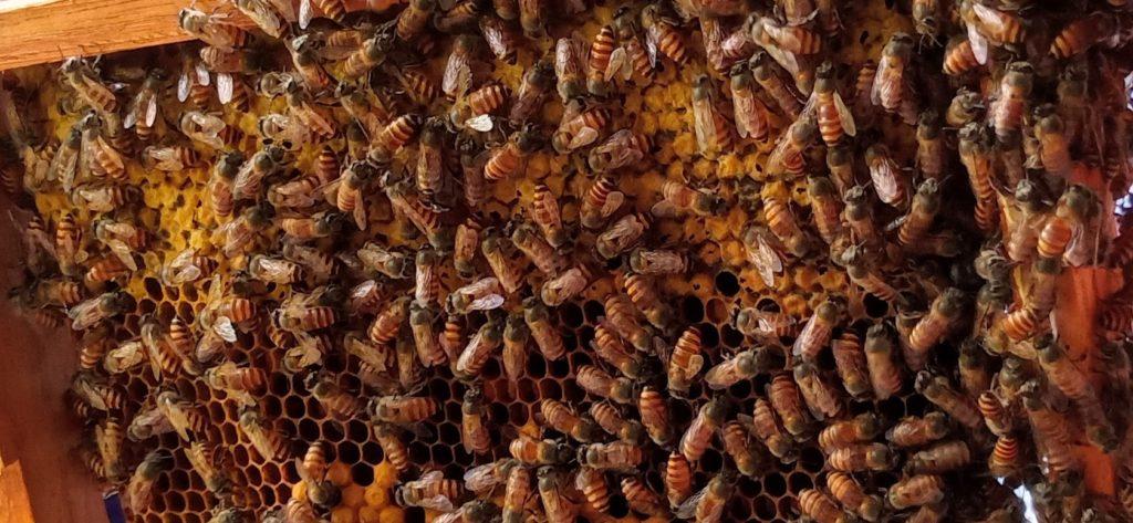 What is HoneyBee-Keeping? 5