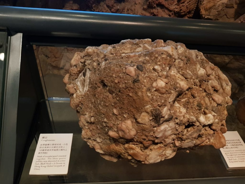 Frenzy 5 Fossils 18